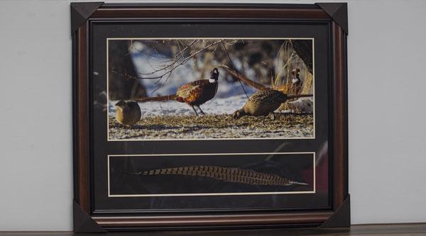 Framed Pheasant Print Banquet Donation